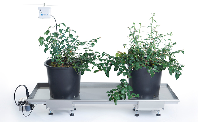 drainvision works on blueberry plants